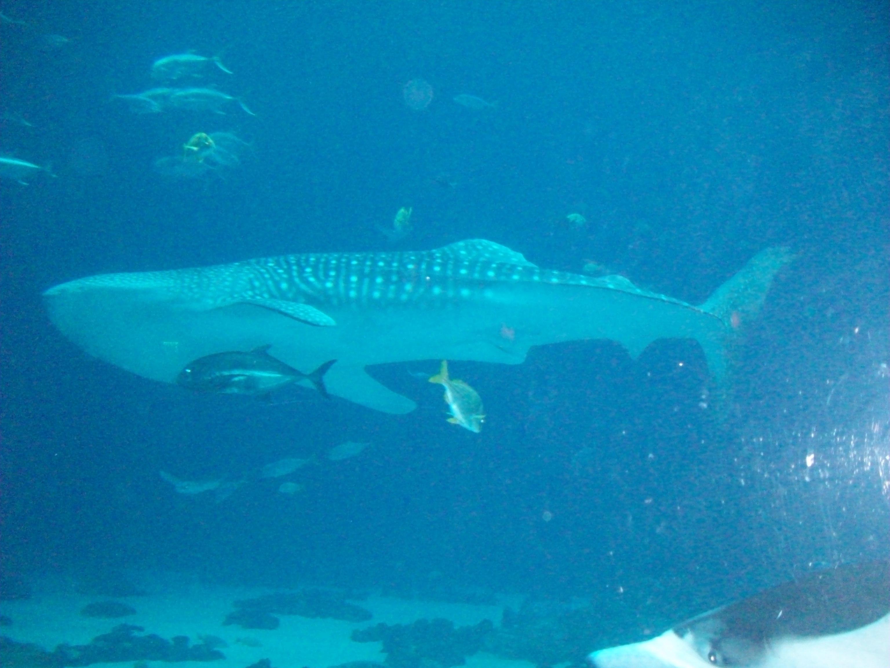 """Visiting the Georgia Aquarium"" (By: Michele Babcock-Nice ..."